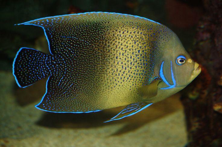 Bright fish !!