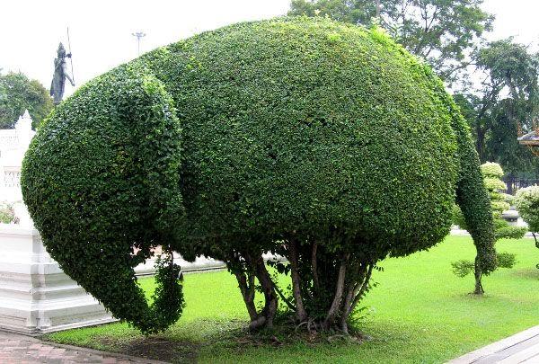 Фигурная стрижка деревьев и кустарников топиари :: Фото красивых интерьеров