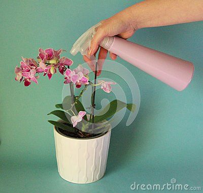 A pink orchid with a sprinkler