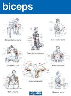Top Bicep Workouts