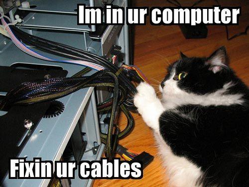 Cat fixing computer cat stuff pinterest cat sciox Image collections
