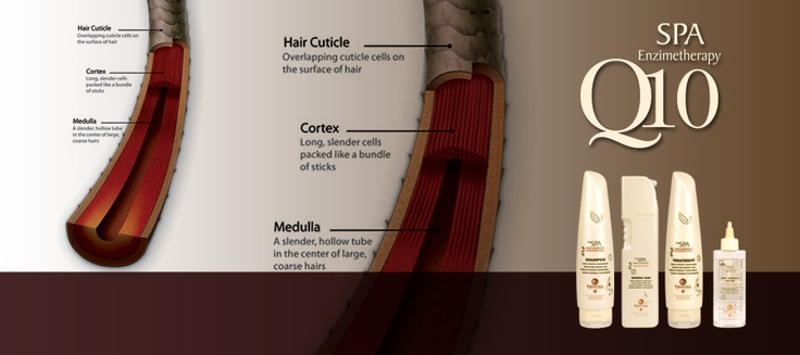 SPA Enzymetherapy, Coenzyme Q10 Based Renewal Hair Treatment - Renew your Hair!    SPA Enzymetherapy - Trattamento di ricostruzione dei capelli basato su Coenzima Q10 - Rinnova i tuoi Capelli!