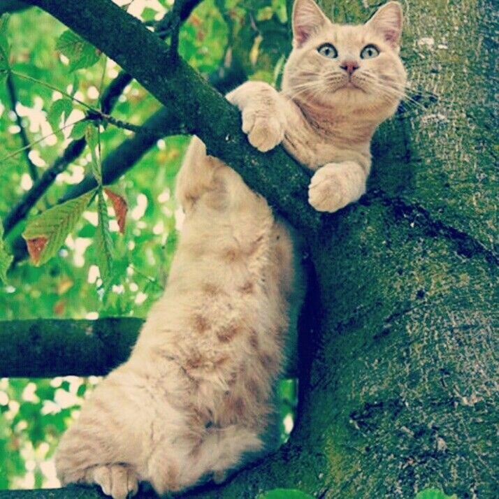 Willy on tree