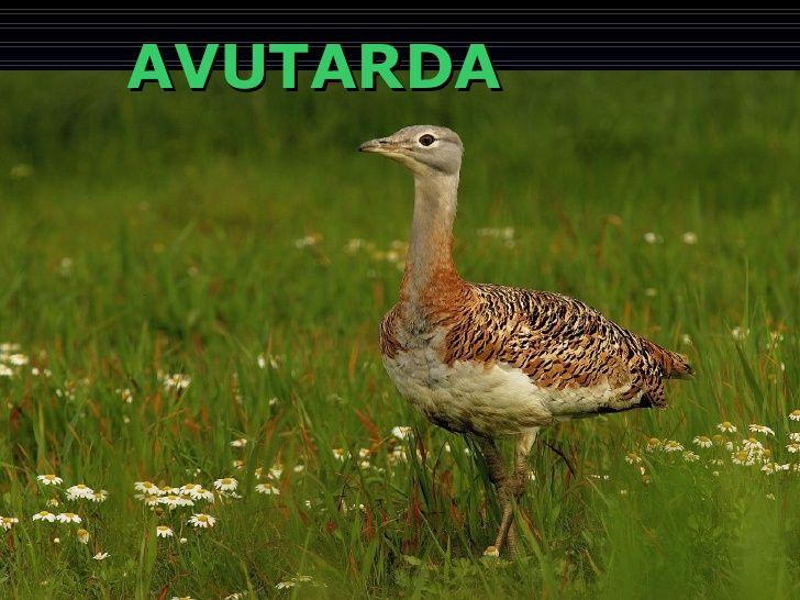 AVUTARDA