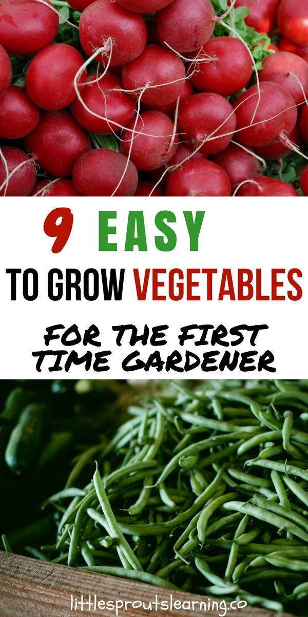 9 Easy To Grow Vegetables For The First Time Gardener Easy