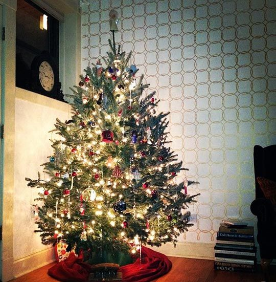 Tips for prolonging the life of your xmas tree
