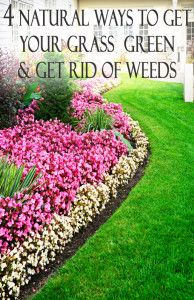 4 Natural Ways To Get Your Grass Green And Get Rid Of Weeds Yard Ideas Pinterest Weed