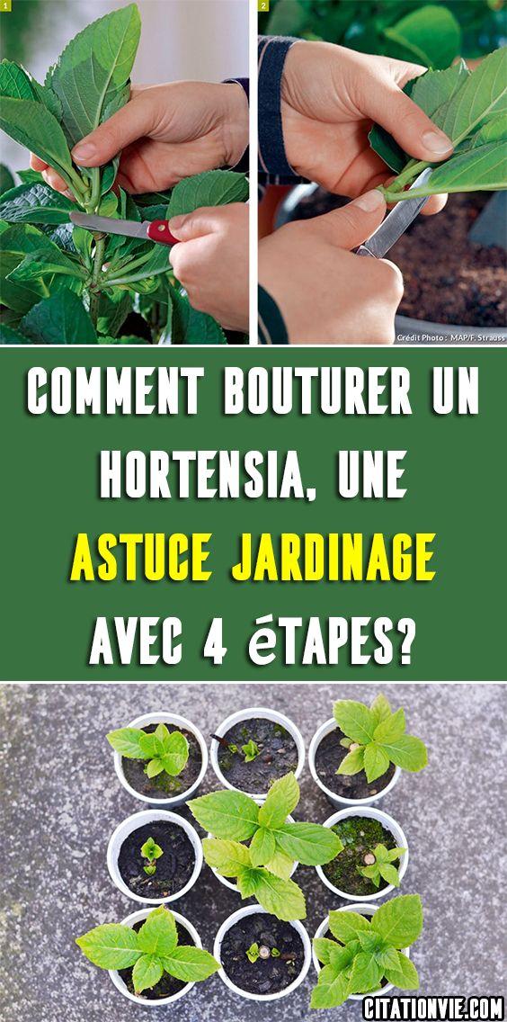 Remark Bouturer un hortensia, une astuce jardinage avec four étapes?