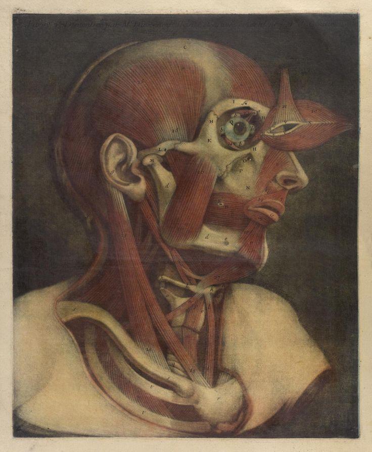 Best 79 Anatomical IV ideas on Pinterest   Antique, Antiques and Bjork