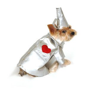 60 besten Puppy Bilder auf Pinterest   Haustiere, Hunde und ...