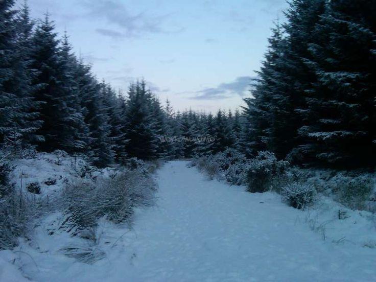 FOREST NEAR WICK