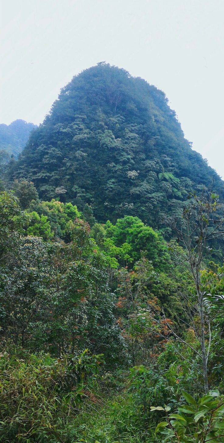Wandering in the deep woods of Turgo hill