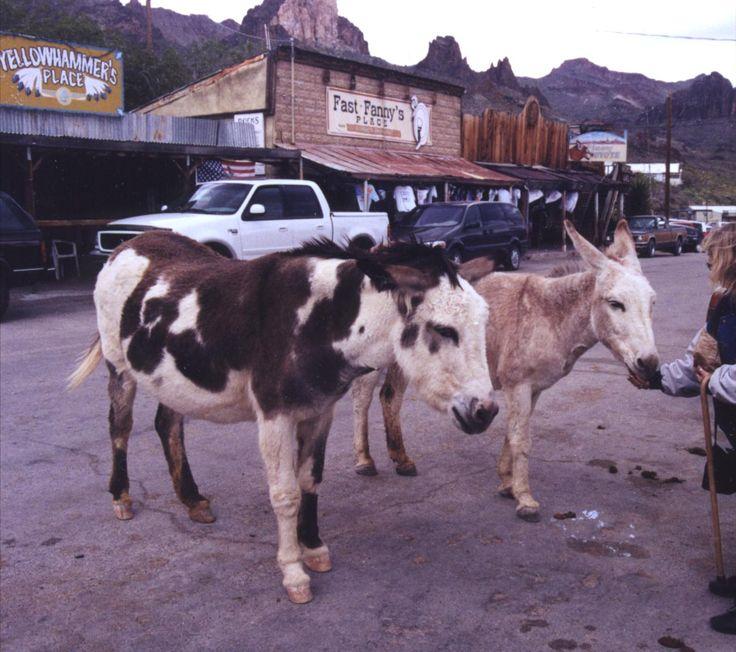 Ghost Towns - Near Las Vegas..Oatman, AZ. The burros are so friendly...such a cute town!