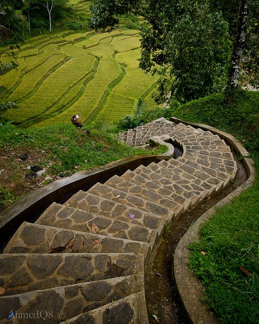 Stairs to rice terraces in Naga village, Java, Indonesia (by ahmedq8).