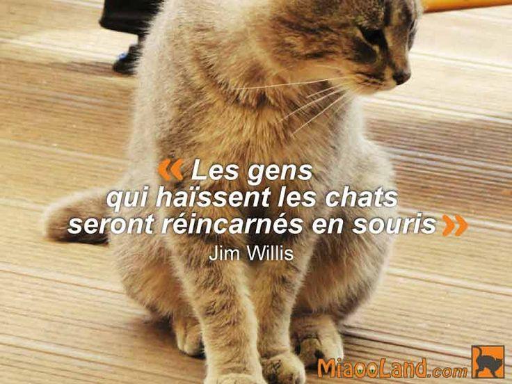 Citation chat Les gens qui haïssent les chats seront réincarnés en souris