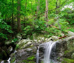 HELP PROTECT THE GEORGE WASHINGTON NATIONAL FOREST FROM DANGEROUS FRACKING!  PLZ Sign & Share!