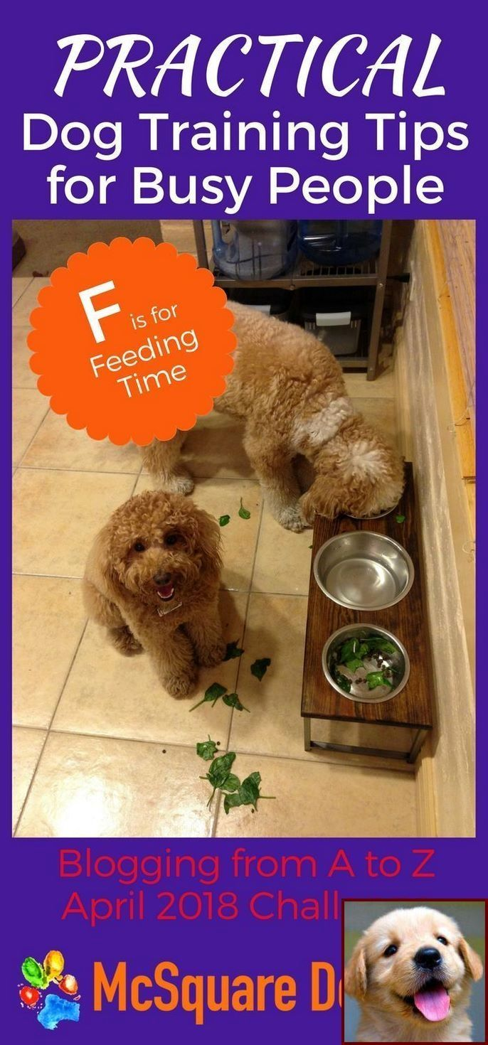 10 Pro Tips For Dog Training By Experts Dog Training Tips Dog