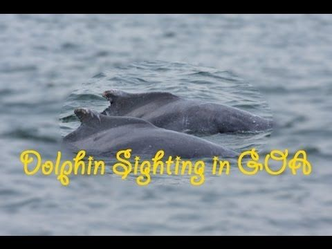 Outing : Dolphin sightseeing trip in Goa (INDIA) - BangaloreBengaluru .. .. .. .. .. .. .. .. .. .. .. .. .. .. .. .. .. .. .. .. .. .. .. .. #bangalorebengaluru #bangalore #bengaluru #india #candolim #goa #travel #outing #favorite #cool #best #love #like #places #getaways #trip #weekend #dolphin #trip #tour #sightseeing