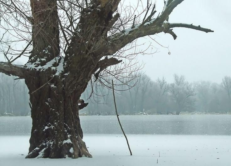 """Az erdők élni akarnak: Gemenc - Tizenkét hónap """"Az Erdőn"""" 2011"""