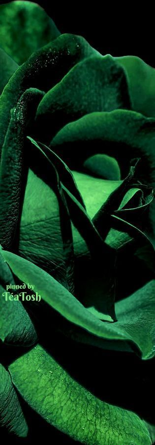 ❇Téa Tosh❇ The Emerald Green Rose Flower by Jennie Marie Schell
