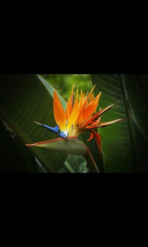Flor-pájaro. Macarena De Manuel fotografias.