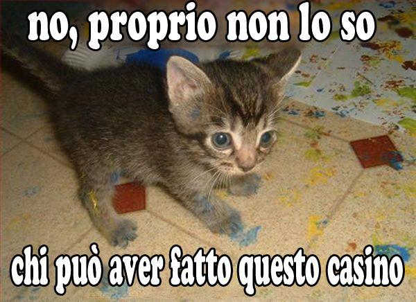 gatto_che_non_sà_chi_ha_fatto_casino.jpg (600×436)