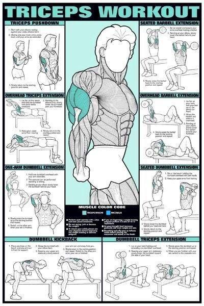 bodybuilding workout diagrams - Google Search