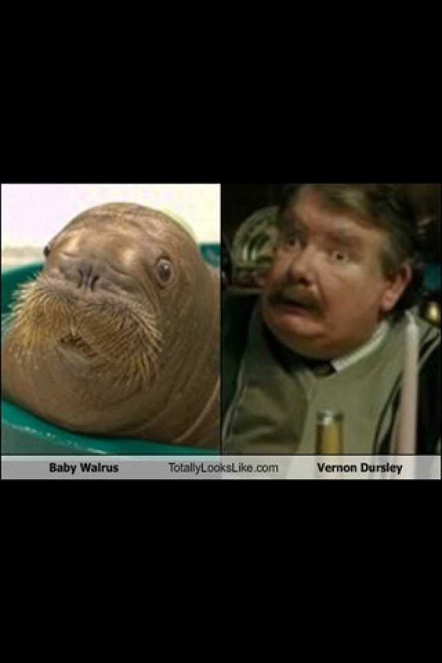 Walrus Vernon Dursley Funny Pinterest
