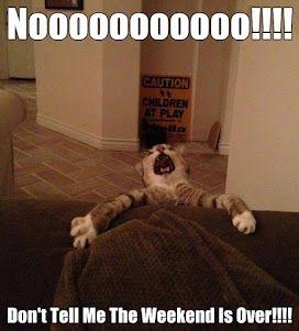 Nooooooooooo!!!! #Cats +Caturday Original Picture Source: http://www.weruletheinternet.com/wp-content/uploads/images/2012/march/lol_animals_4/funny_animal_pictures_7.jpg More photos from Joe Martinez
