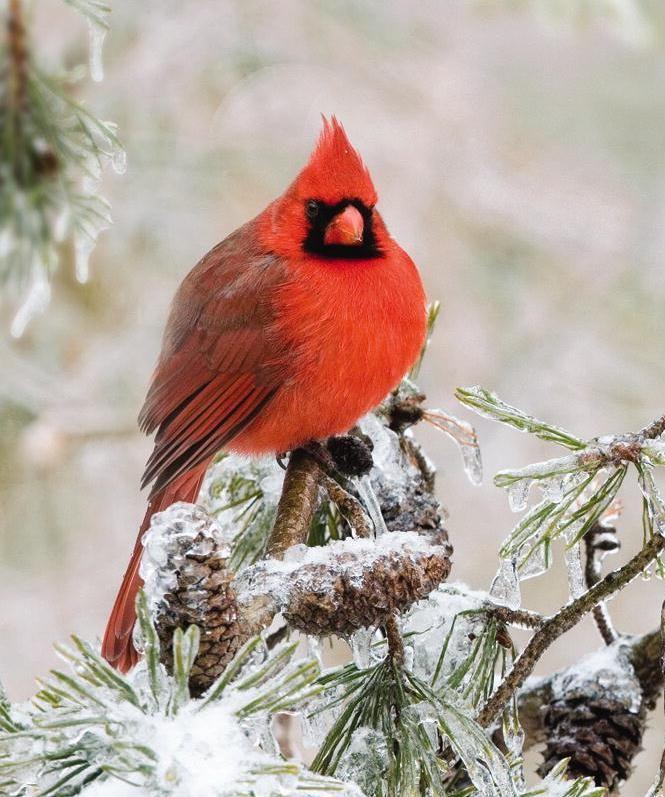 Feeding Wild Birds in Winter | Wild Birds Unlimited: December 2012