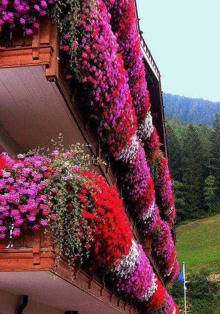 Südtirol; Dolomiten , Geranienpracht  am Balkon   - 434/1127 by roba66, via Flickr
