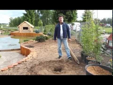 Как сохранить черенки роз осенью и посадить их весной - YouTube