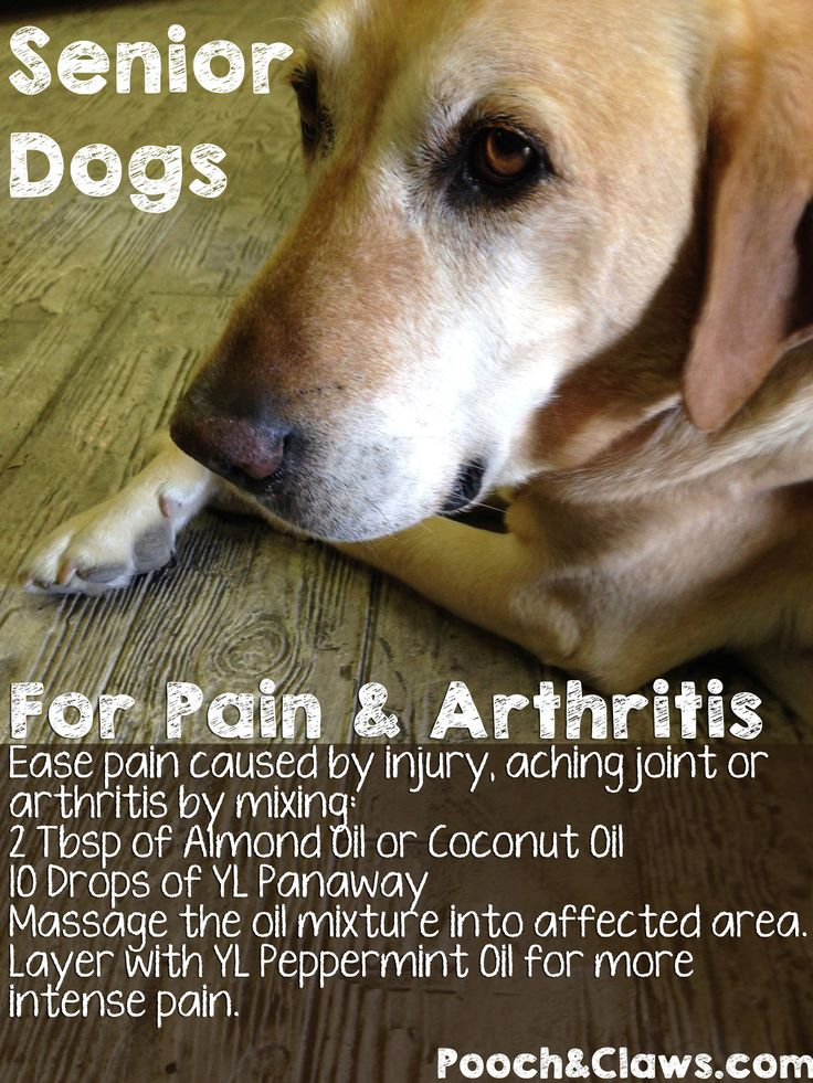 Senior Dogs natural remedy for Pain & Arthritis with Essential Oils Recipe.