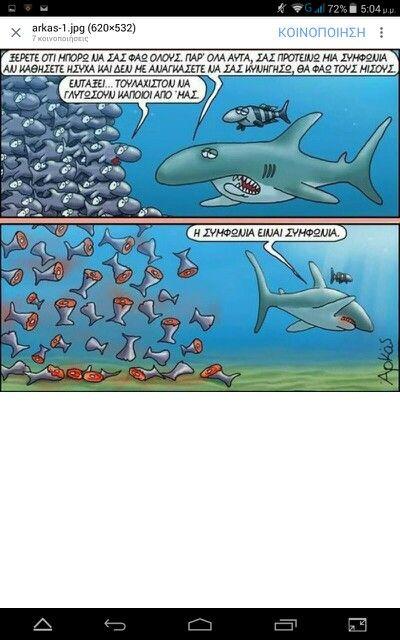 Αρκας καρχαριας