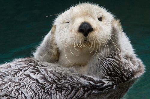 =]: Critter, Cant, Otters Sooo Adorable, Creatures, Awesome Animals, Amazing Animals