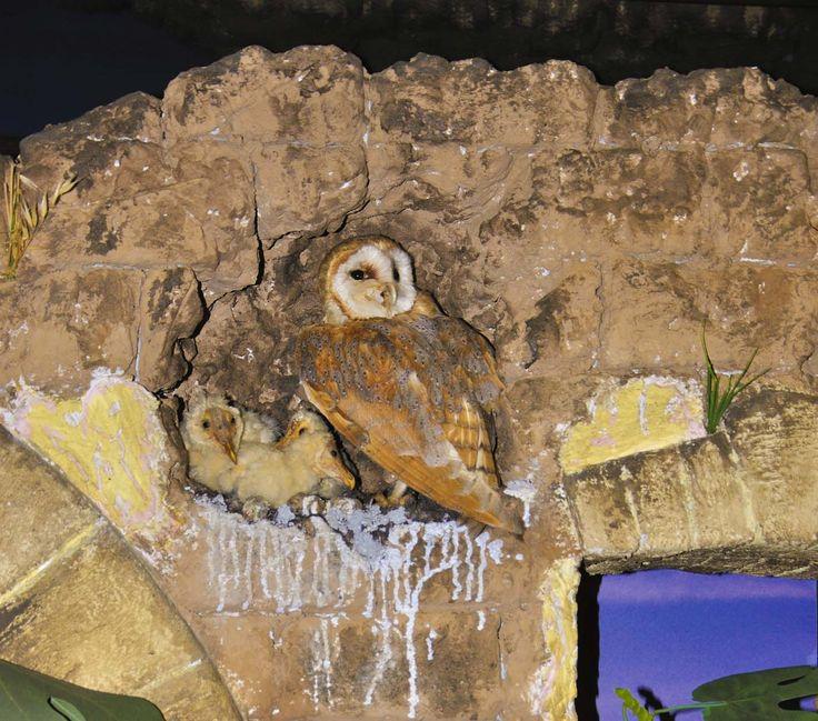 Particolare del diorama dedicato ai rapaci notturni della Sardegna Museo zoologico Università di Cagliari.