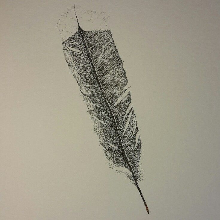 Huia feather done in the style of pointillism by Kristin.Ivill.Art