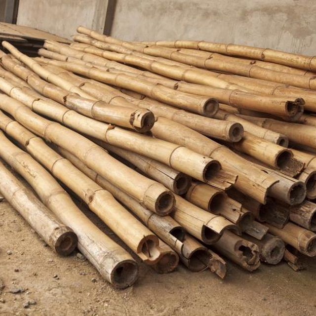 Best 25 bamboo ideas ideas on pinterest for Where to buy bamboo sticks for crafts
