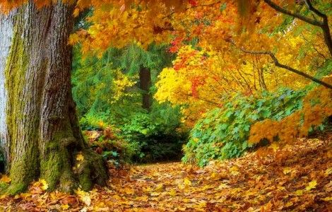 Autumn Fall of Leaves in Forest