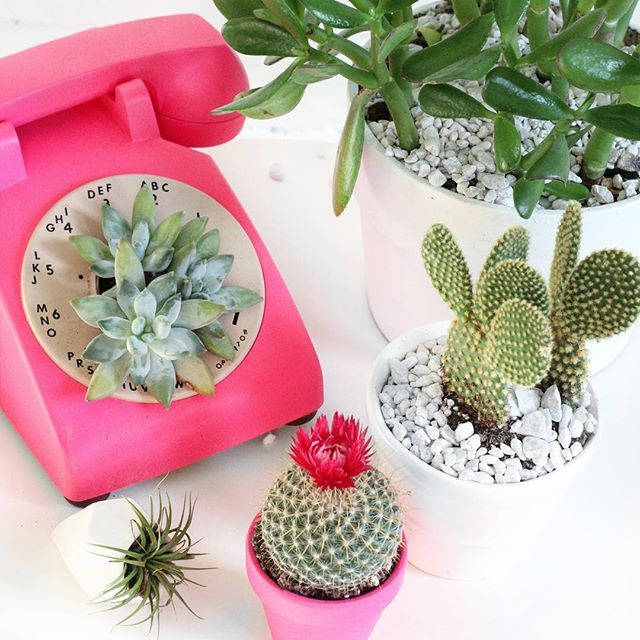 classy pictures of cactus house plants.  My Ma called this morning to ask if I wanted her plants because my parents are heading Florida for the winter did not have heart tell 416 best QUIRKY INDOOR PLANTS images on Pinterest Balcony Drift