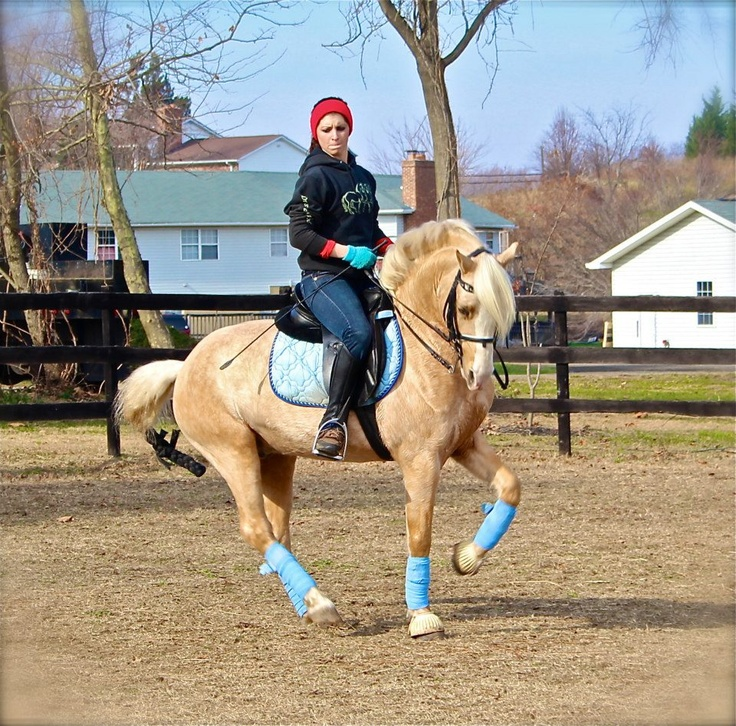 WinterLake Tristian - Welsh Pony Dressage Stallion