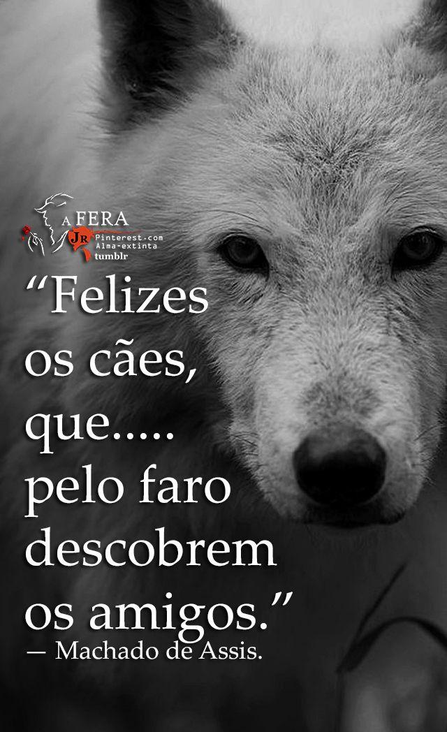 Felizes os cães, que pelo faro descobrem os amigos.— Machado de Assis. https://br.pinterest.com/dossantos0445/