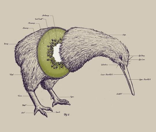 anatomy of a kiwi (bird)