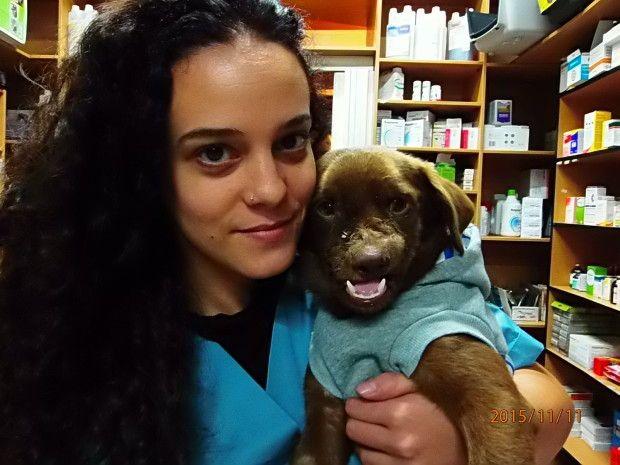 Χανιά: Πρωτοποριακή χειρουργική επέμβαση έσωσε τον σκύλο που κάποιος χτύπησε διαλύοντας του τη γνάθο