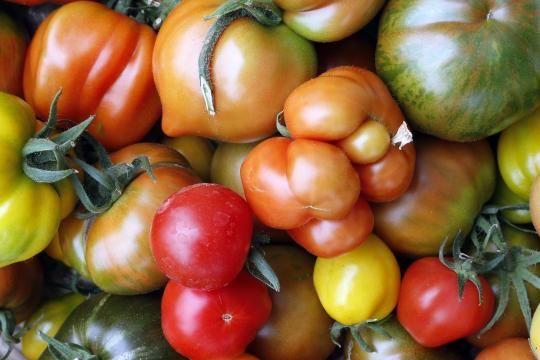 Je roter eine Tomate ist, umso mehr Lycopin enthält sie.