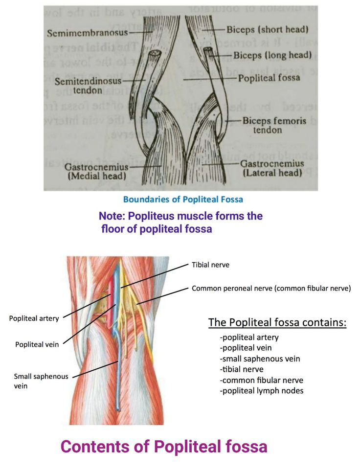 Popliteal space anatomy