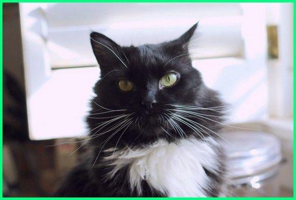 Ekor9 Com Siapa Nama Kucing Jantan Anda Sebenarnya Memberi Nama Pada Kucing Peliharaan Bukan Perkara Wajib Anda Tidak Harus Merangkai Nama Di 2020 Kucing Hewan Lucu