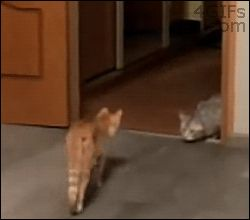 Pro cat fight tip: always try to confuse your opponent. | 12 Funny Cat GIFs (Plus A Bonus Video)