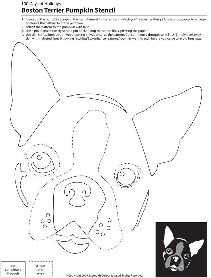 Boston Terrier Pumpkin Carving Stencil