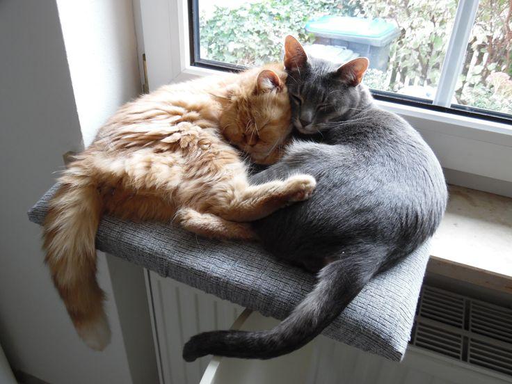 Garfield und Gismo mögen sich sehr